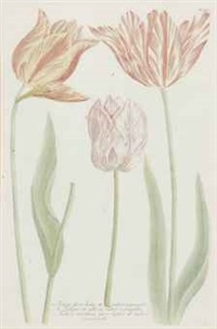 [tulips]: seventeen plates (17 works) by continental school (19)